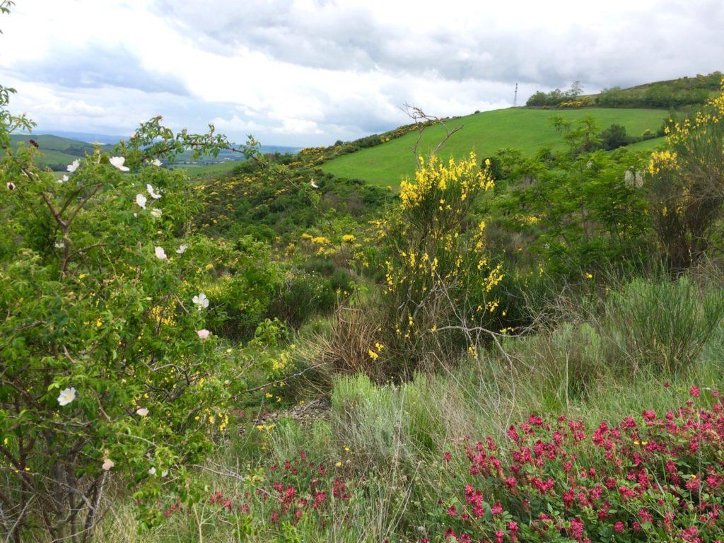 View of wildflower strewn green hillsides