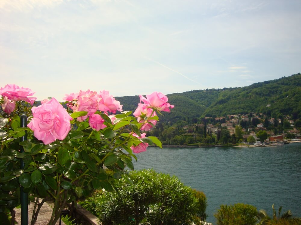 pink roses overlooking the lake on Isola Bella