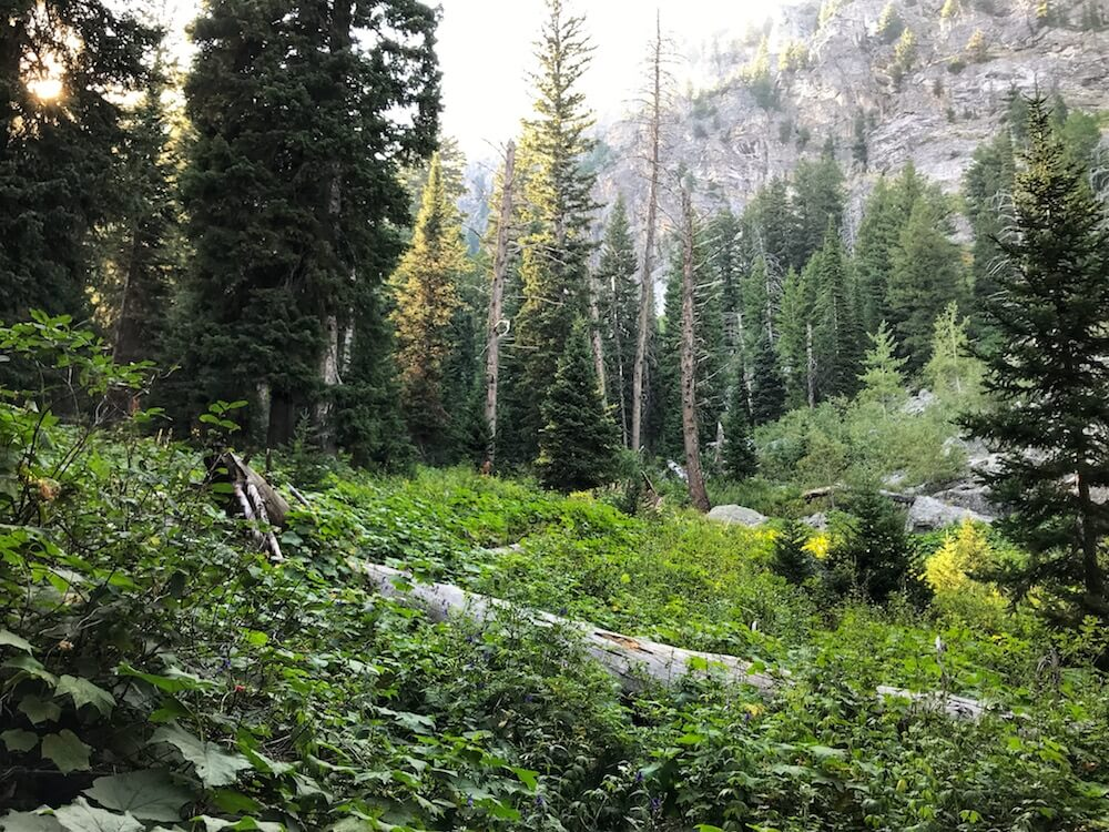 thins to do in Grand Teton National park