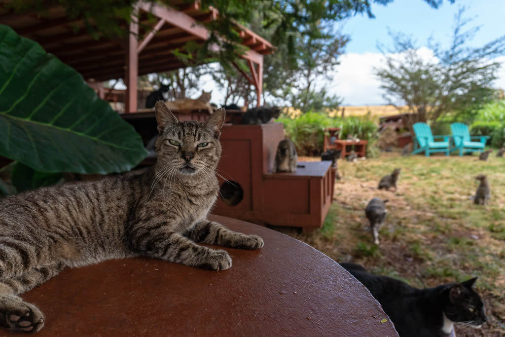 Lanai-Cat-Sanctuaryjpg