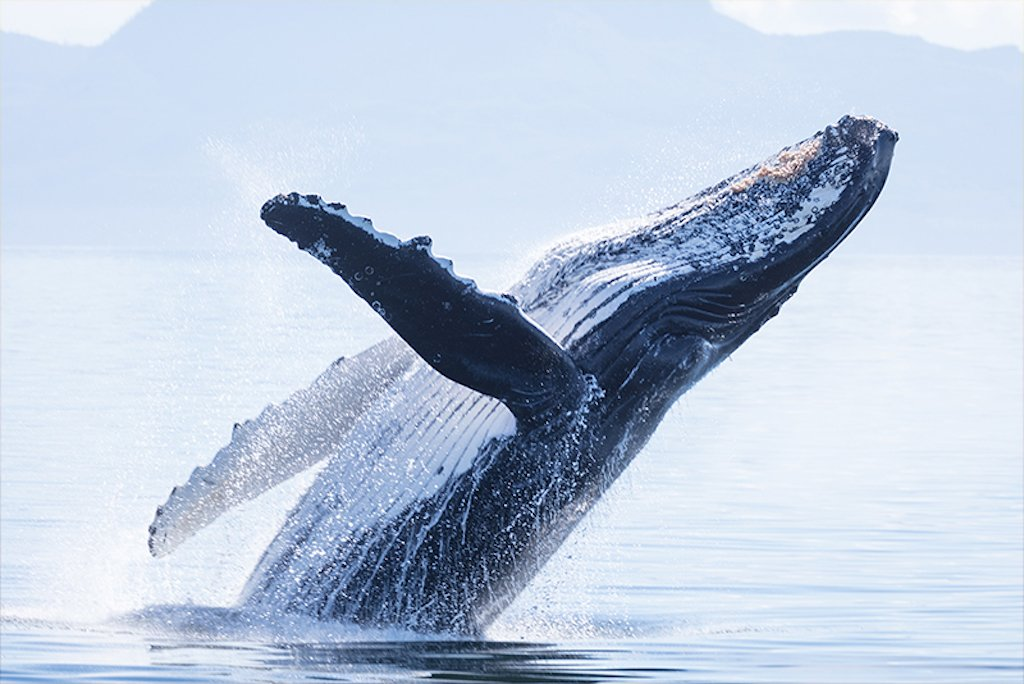 whale watching in winter in San Diego