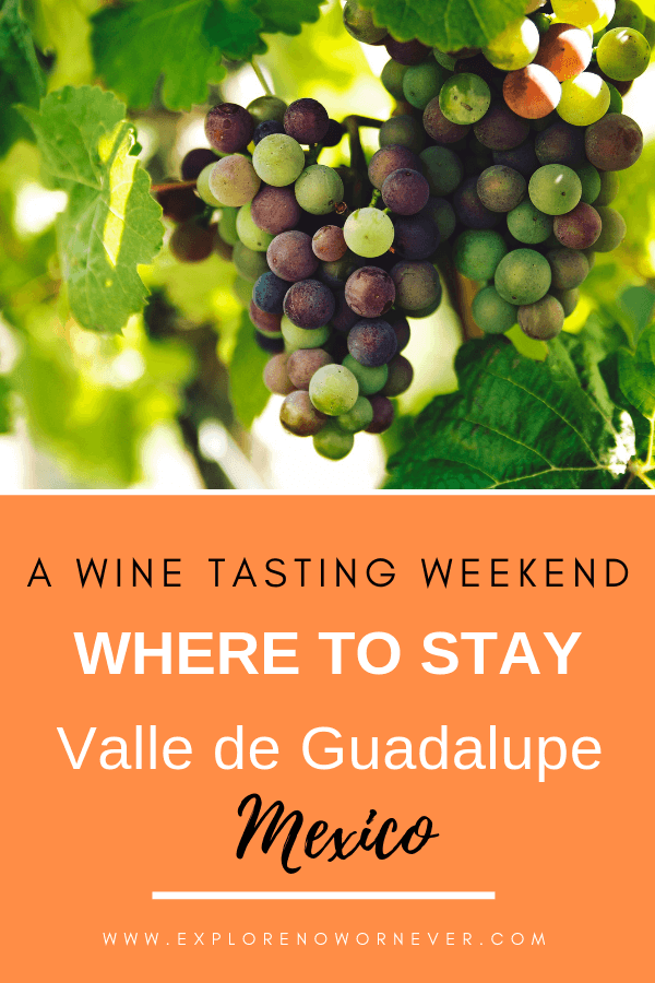 "Valle de Guadalupe is a unique and beautiful place for a wine tasting getaway! This is a detailed guide to the ""best of the best"" Valle de Guadalupe hotels: luxury hotels, B&Bs, and budget stays. Click to read more. #mexicotravel #valledeguadalupewinetasting #valledeguadalupehotels"