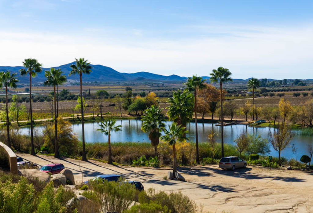 manmade lake with palm trees by a winery