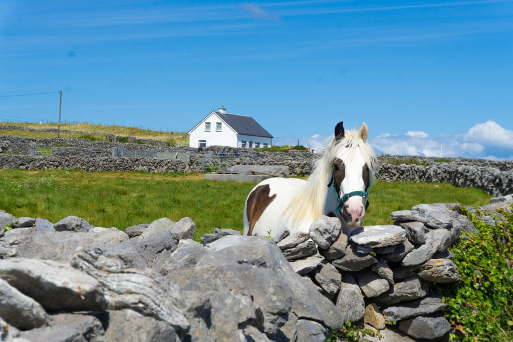 Pony looking over a rock wall
