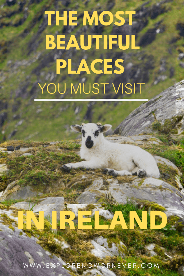 A sheep on a rocky cliff with text overlay near Killarney National Park, one of the most beautiful places in Irelan