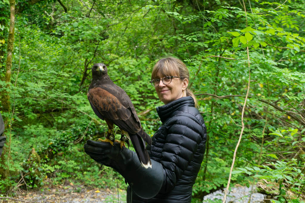 woman with a Harris Hawk