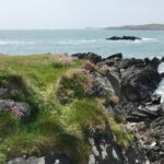 cliffs covered with grass, lichen and pink clover by the se