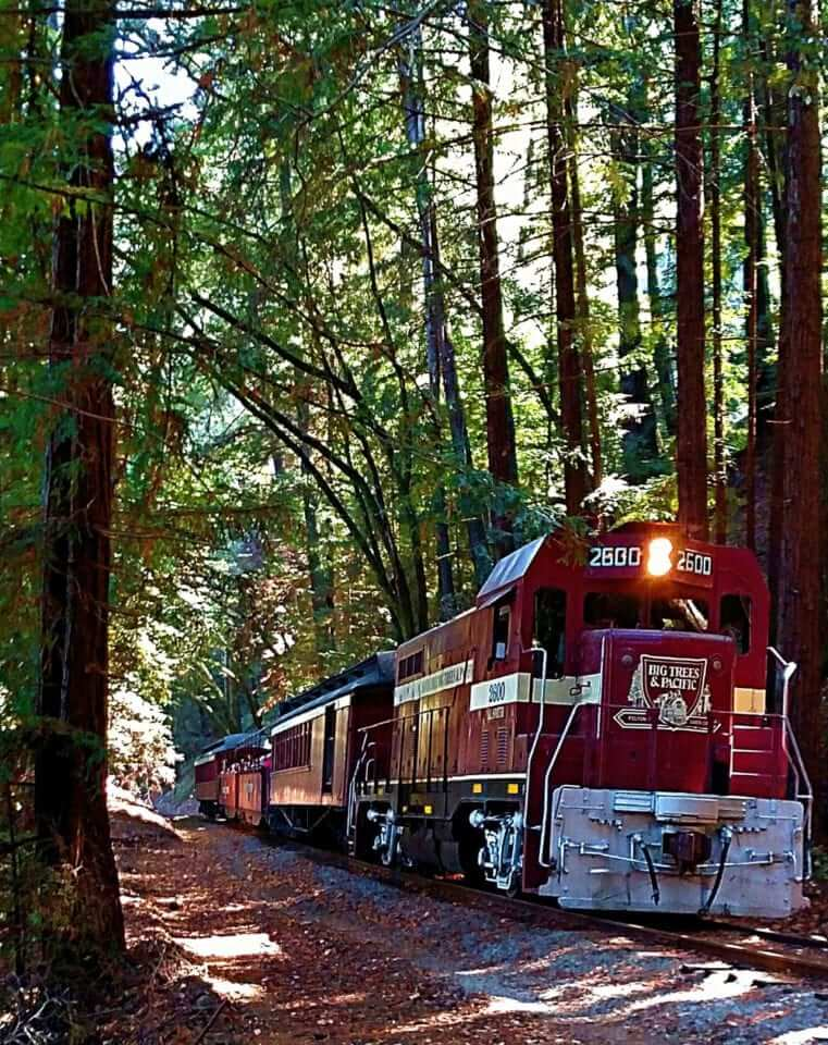 red train on a track through the redwoods