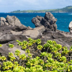 volcanic rock coastline and plants with ocean near Kapalaua