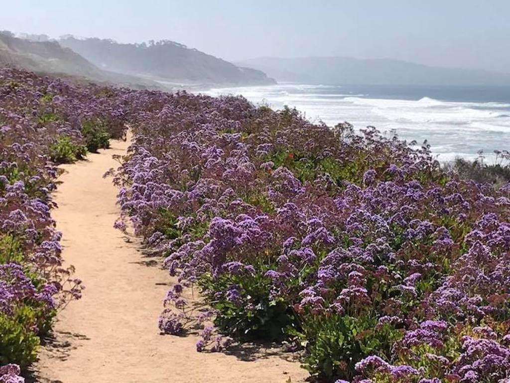 San Diego wildflowers in April