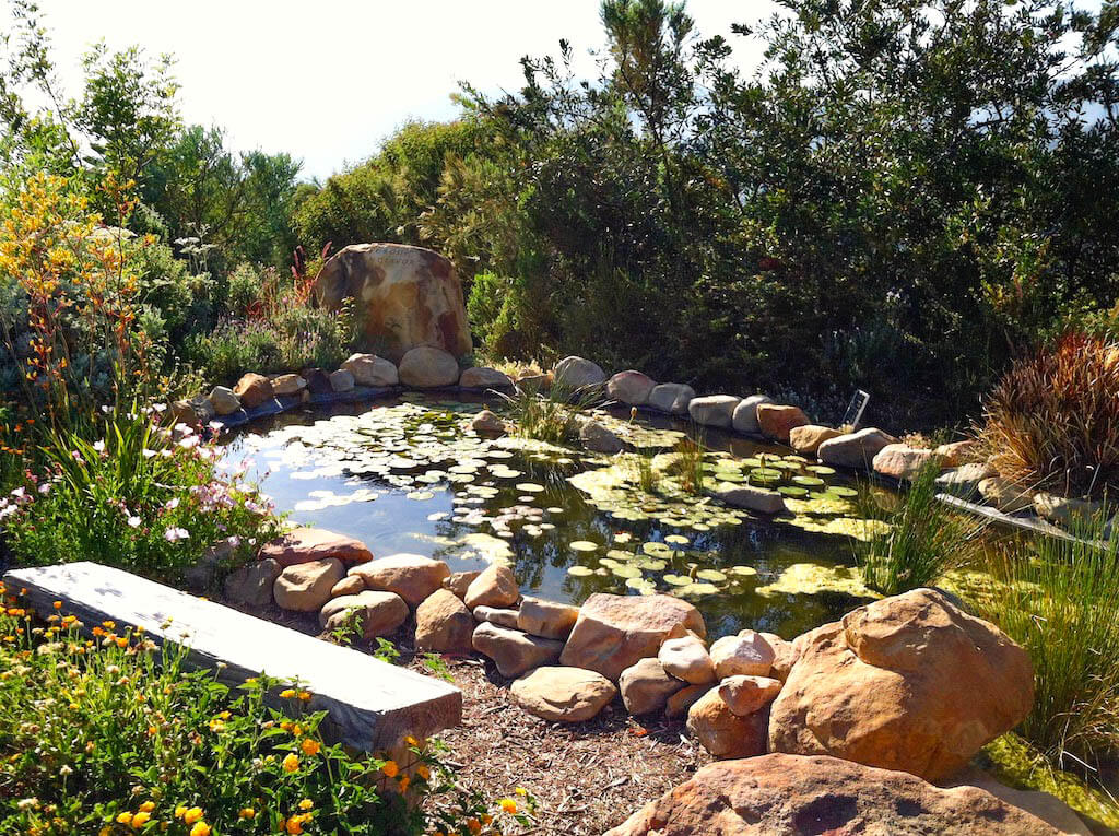 lilly covered pond in Ojai California