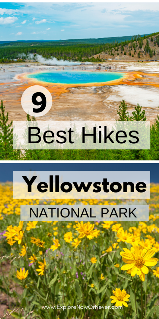 text overlay on photo of Yellowstone hot springs and wildflowers