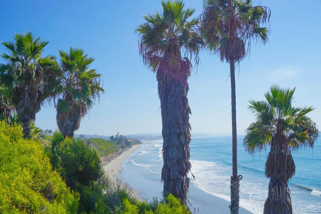 Encinitas coastline with palms