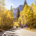 highway surrounded by yellow leafed trees in June Lake