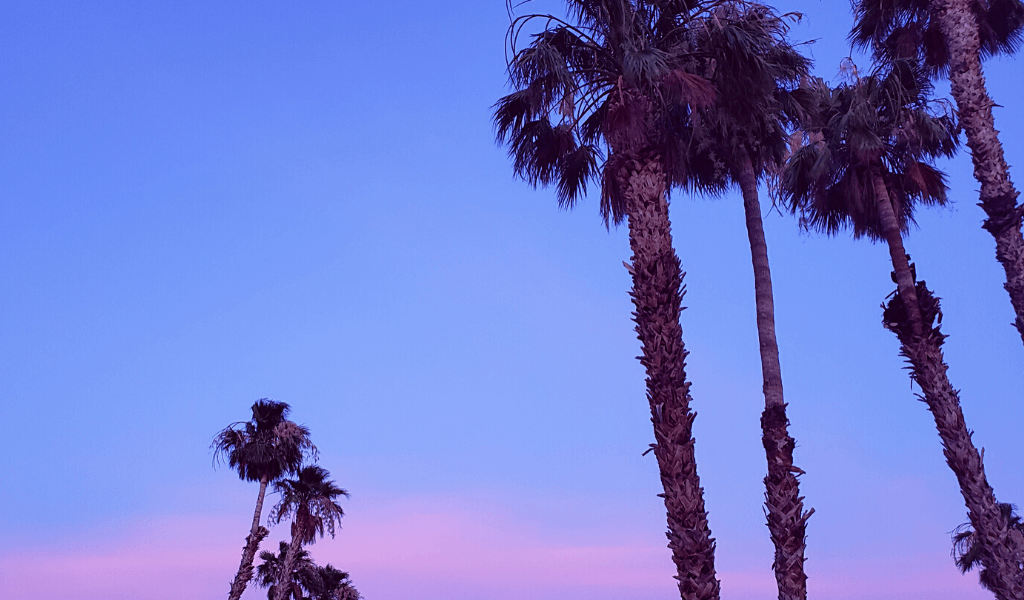 Palm trees in a pink sunset