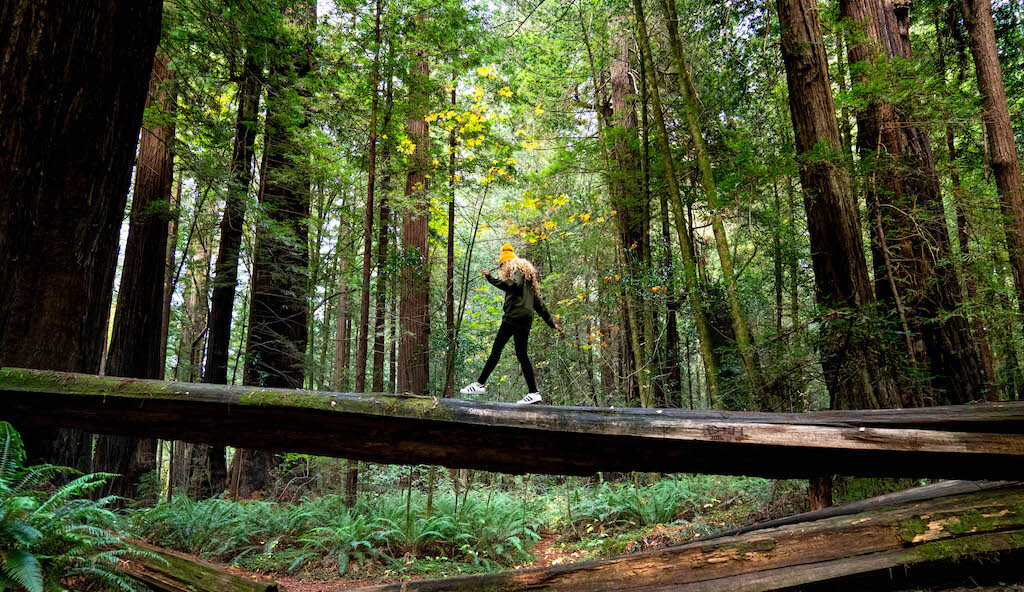 Woman crossing a fallen log in a redwood forest