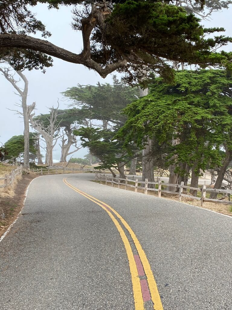 empty stretch of road on Carmel's 17 mile drive