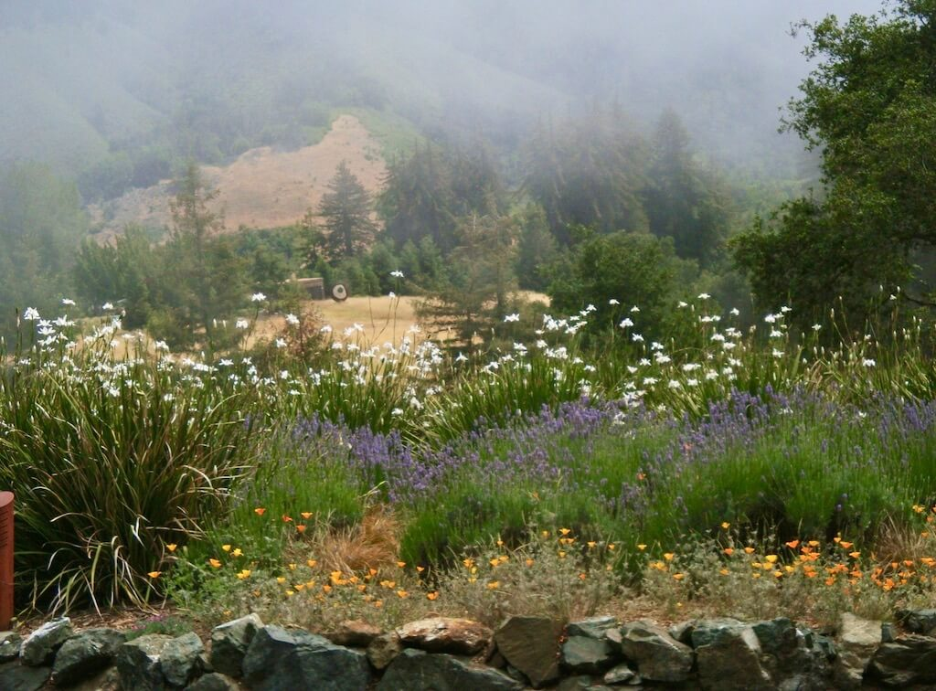 flowers and fog at Post Ranch Inn