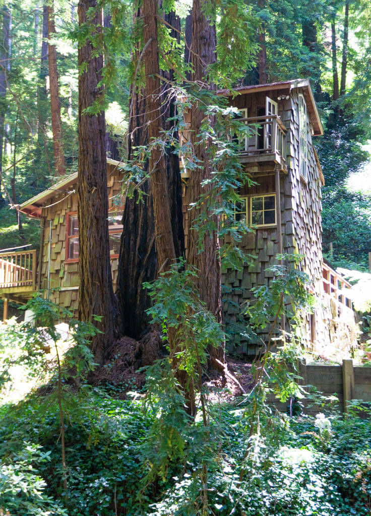 little shingled wooden cabin in the redwoods