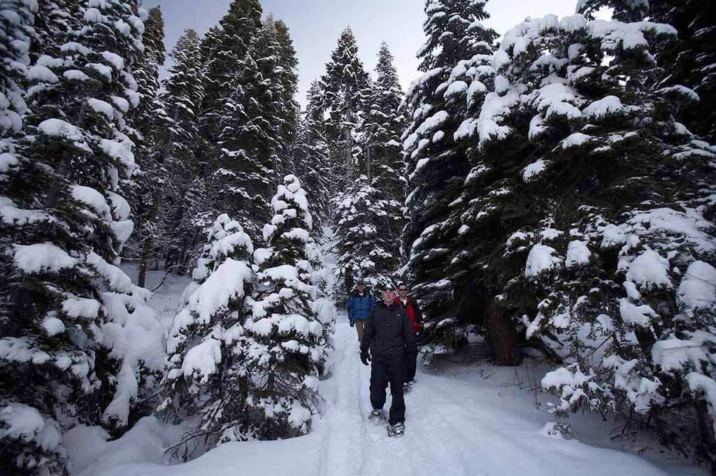 snowy pine wonderland of Lake Tahoe in January