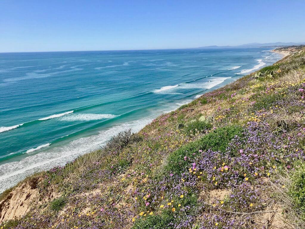 wildflowers by the sea in La Jolla