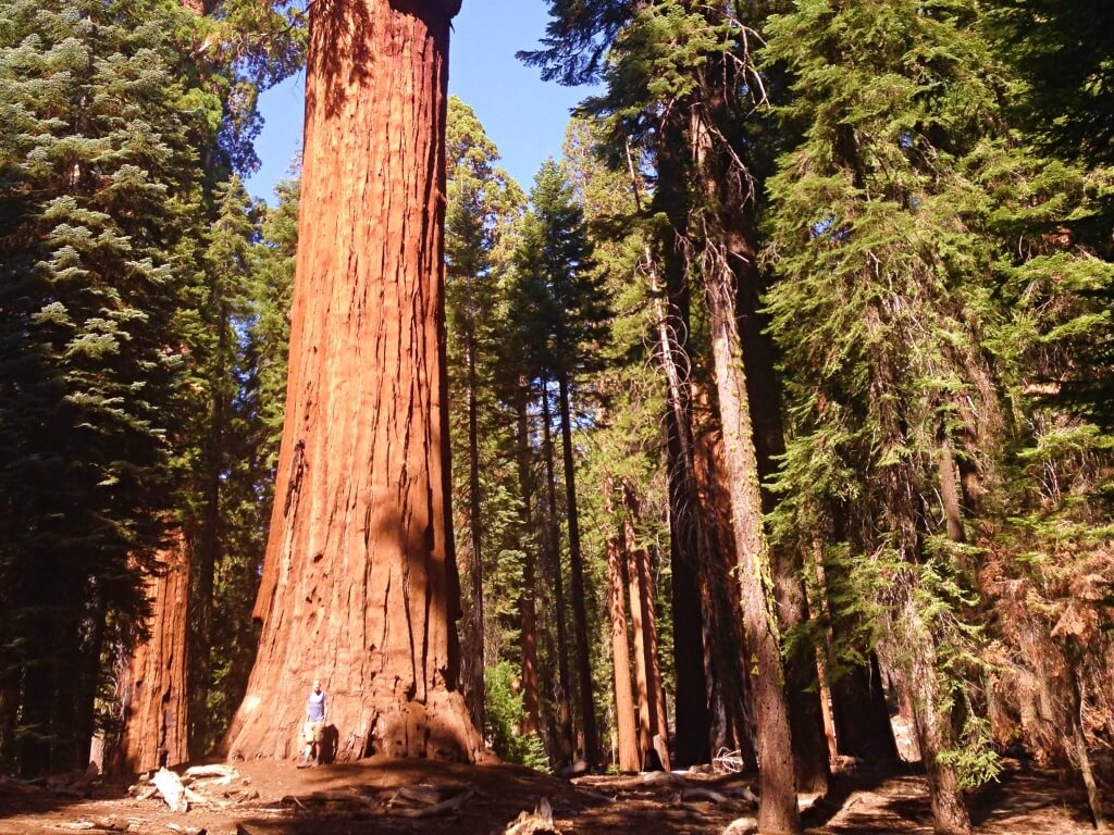 giant redwoods in Sequoia National Park, one of the best west coast national parks to visit