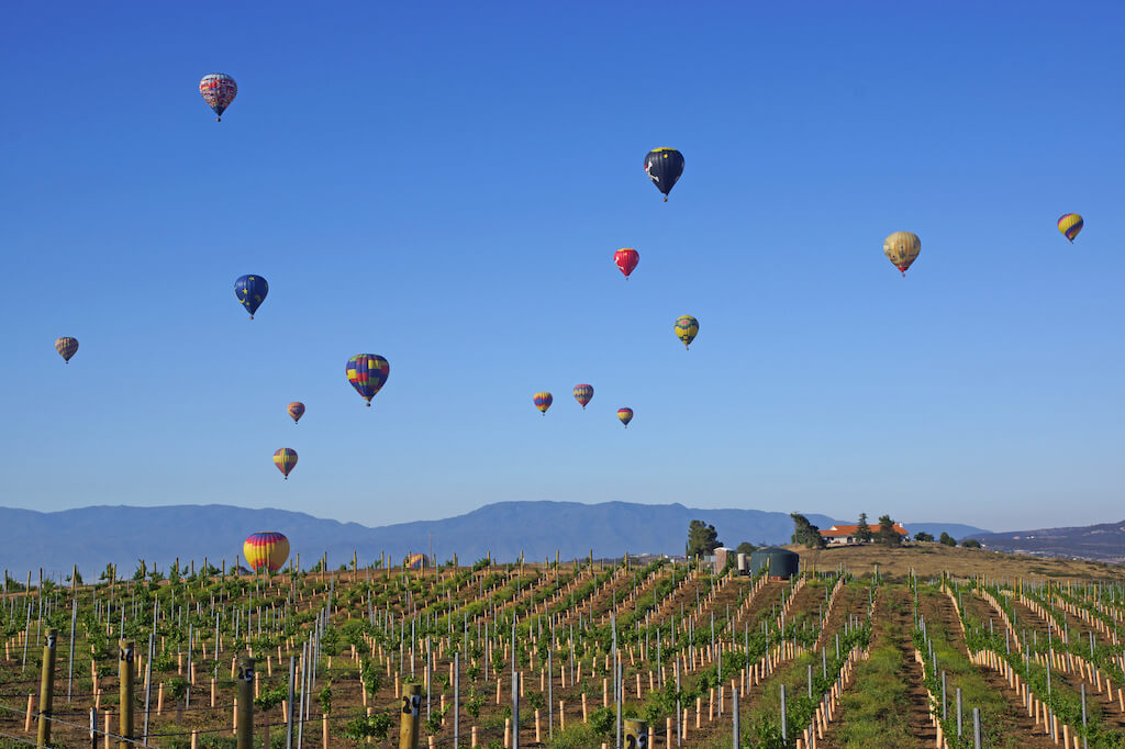 hot air balloons above a vineyard