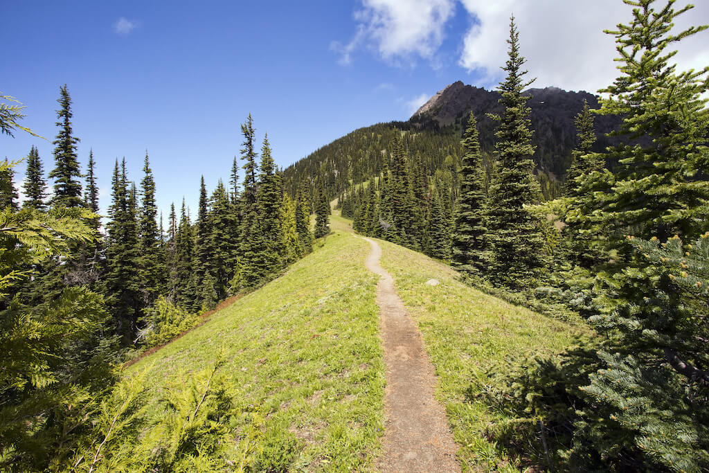 hiking trail through a pine forest
