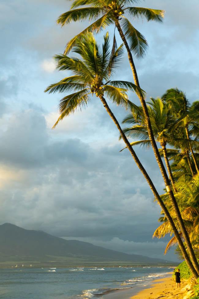 Kihei beach and palm trees