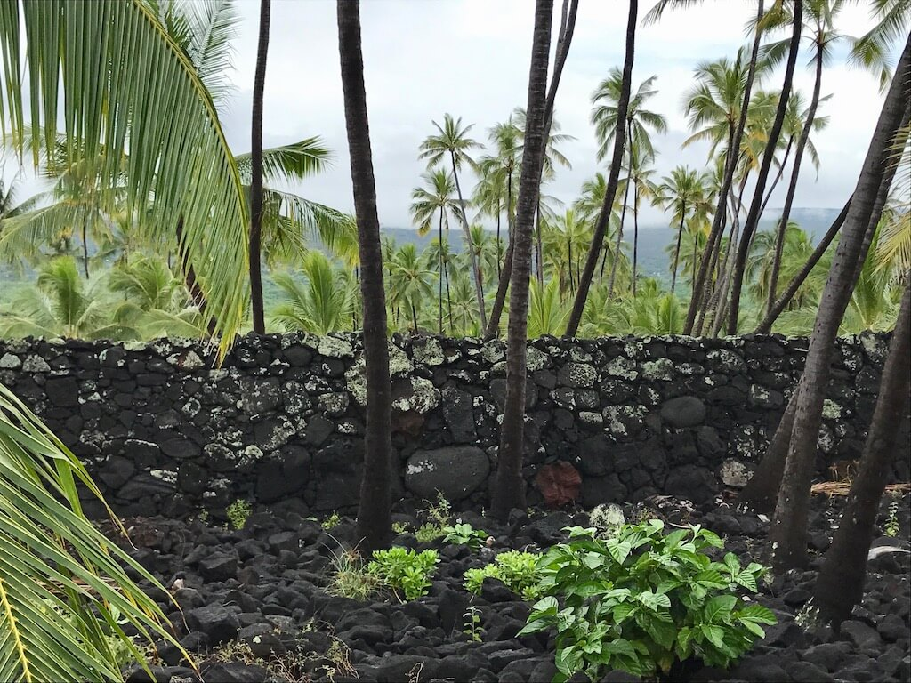 lava and palms at Place of Refuge