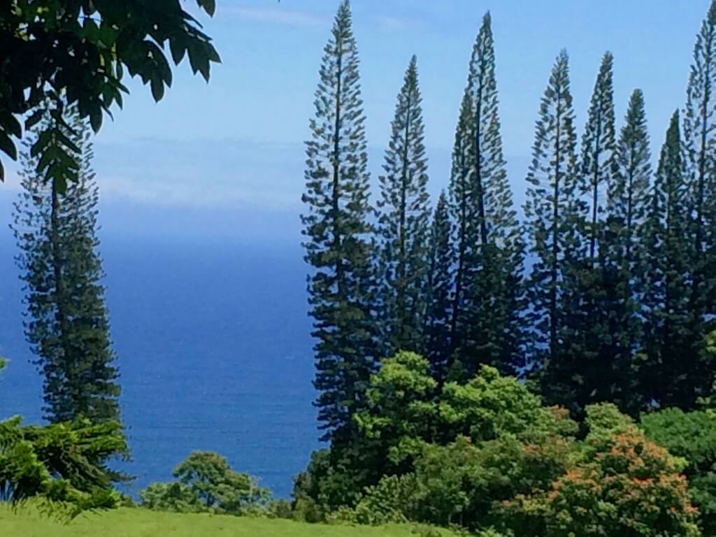 trees and oceanview on Road to Hana