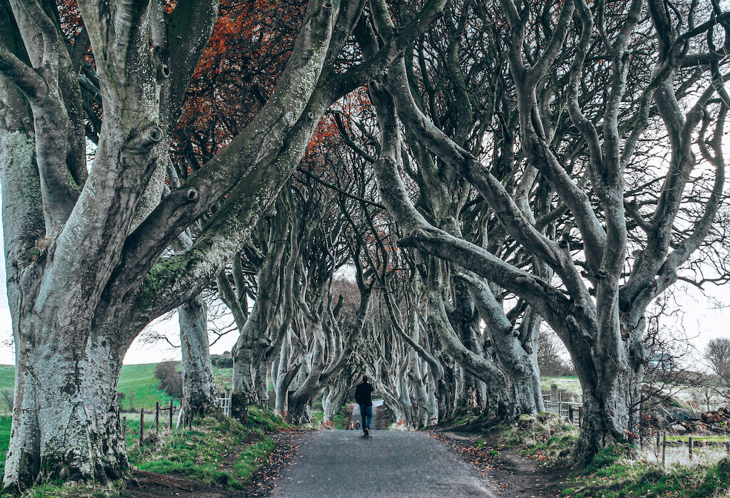 man walking through dark hedges