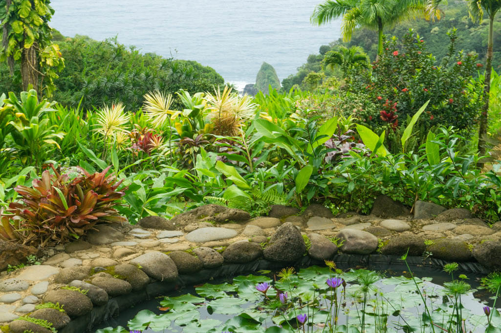 botanical garden on the road to Hana