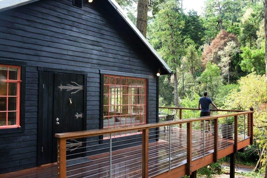 treetops outside view