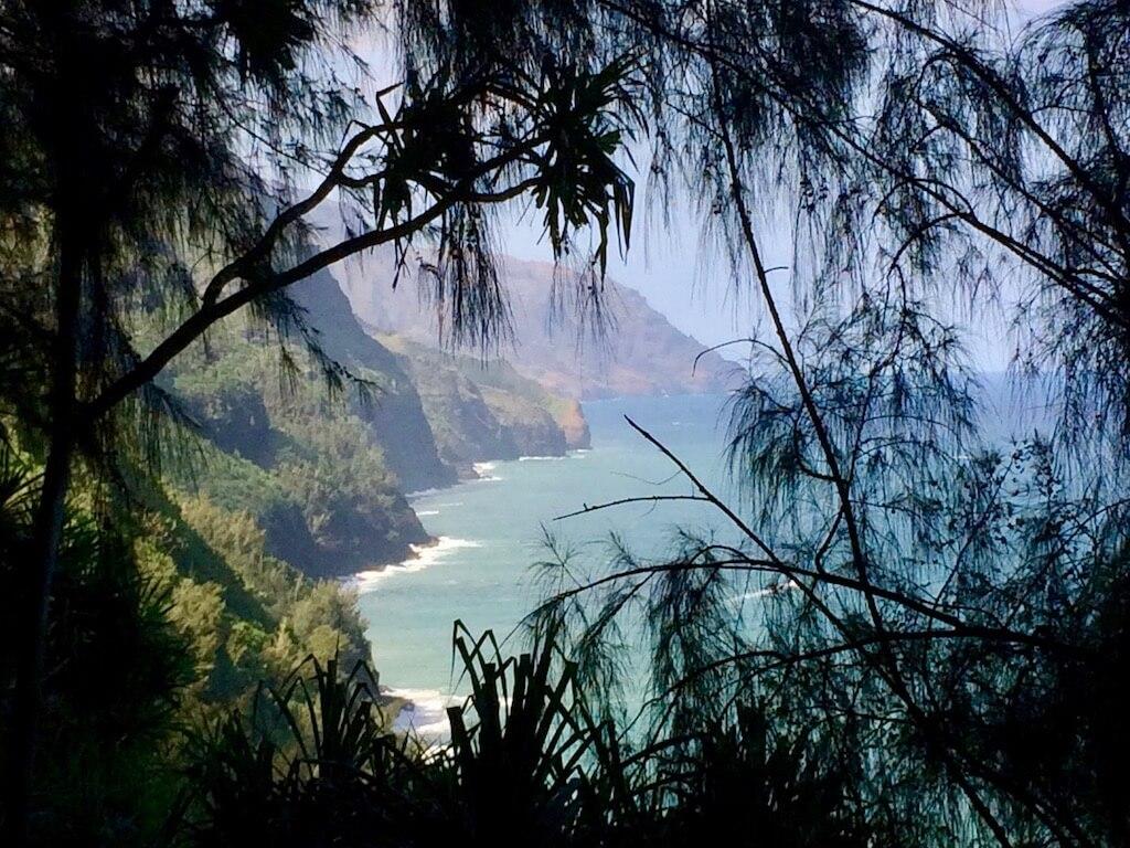 Ocean view through pine trees from Kalalau Trail