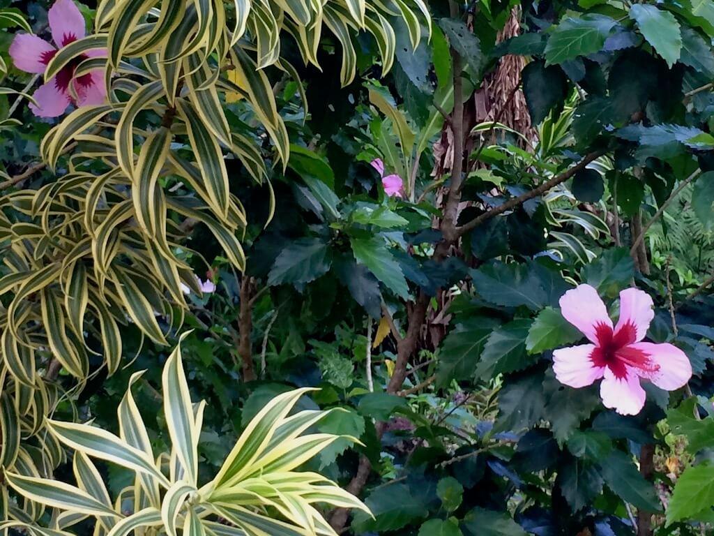 Hawaiian flowers and vines