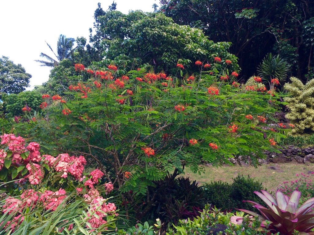 lush foliage and flowers in Kauai