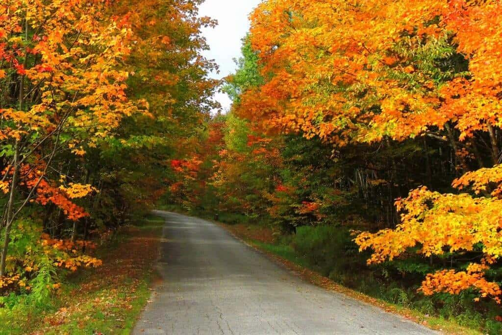 country road with bright orange trees in Bennington Vermont in October