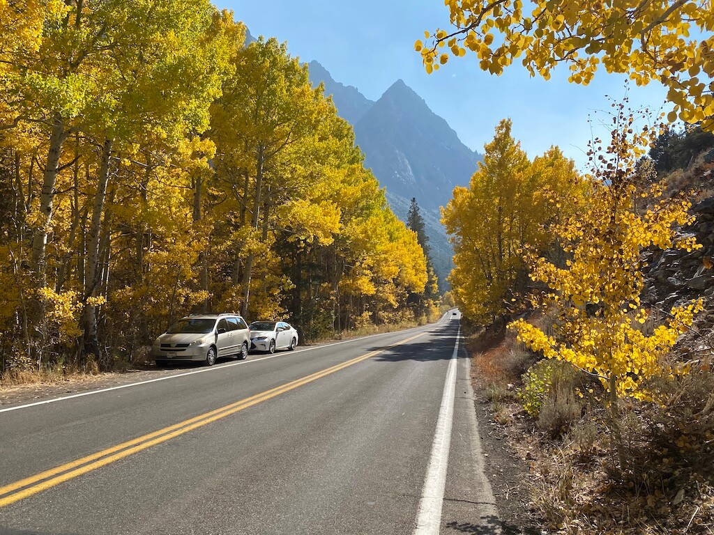 country road with golden trees on both sides