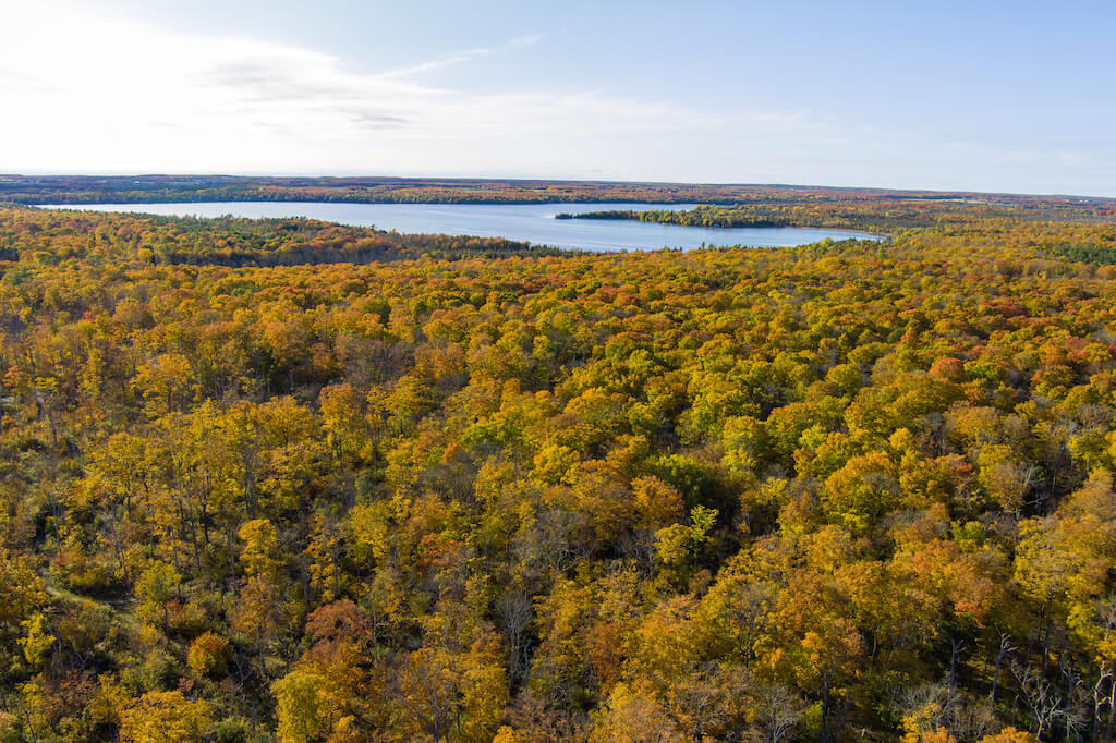 golden fall tree trops and lake inlet from above