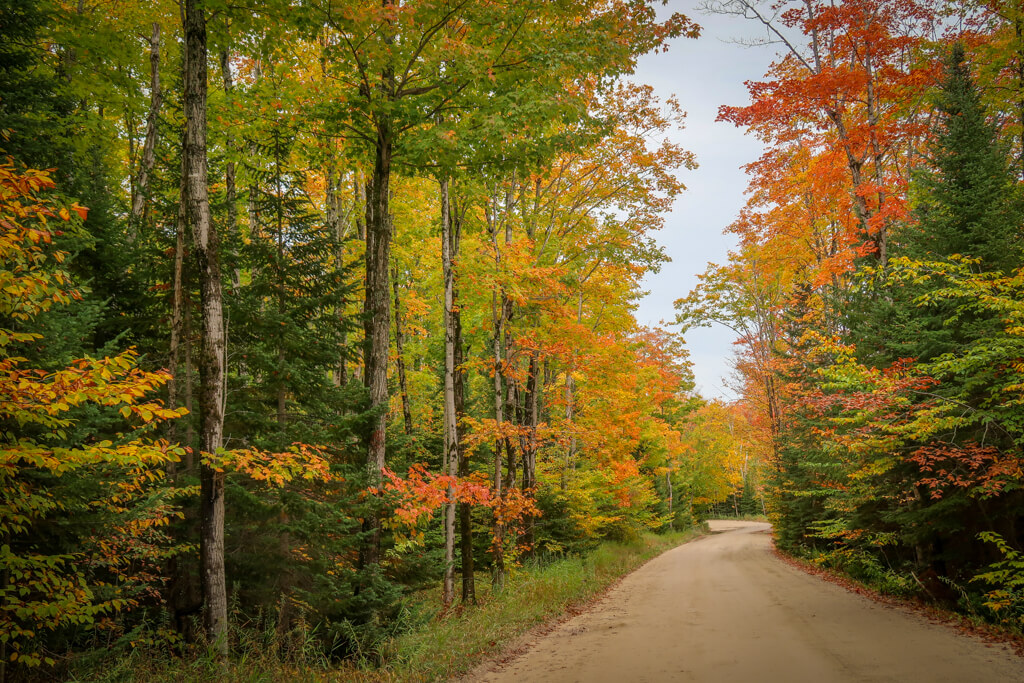 winding single track road through a forest of green, gold, orange and red trees
