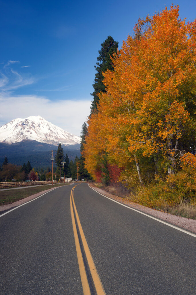 Orange tree foliage by side of the road with snow capped mountain peak behind it