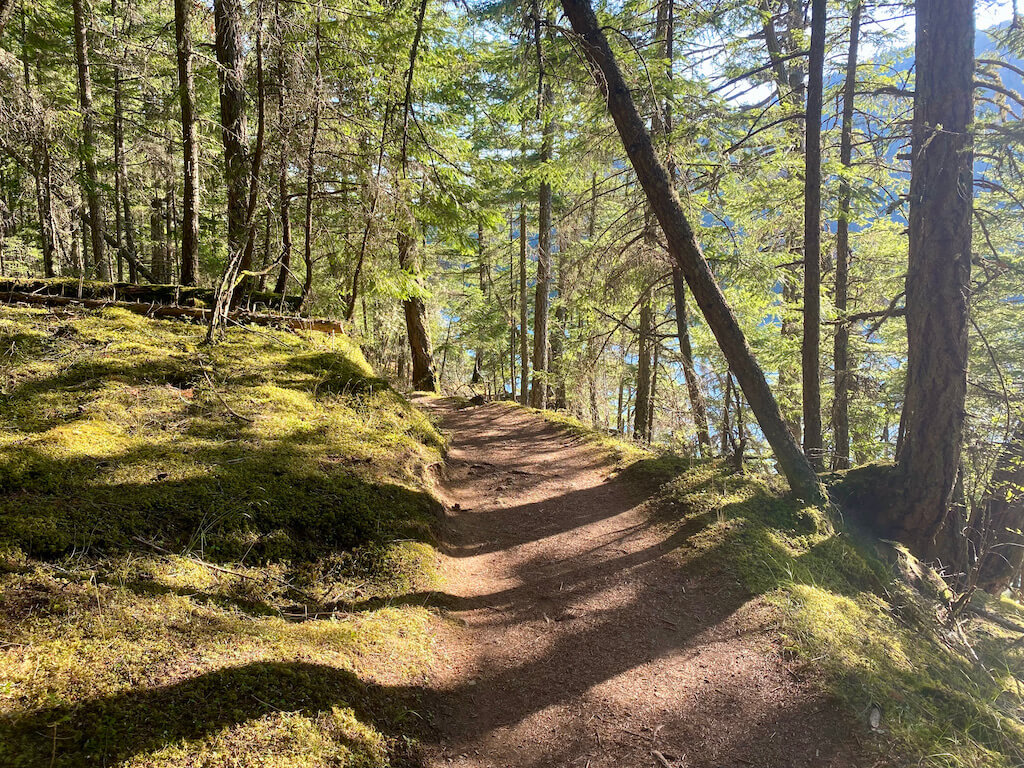 trail through a sunlit forest by a lake