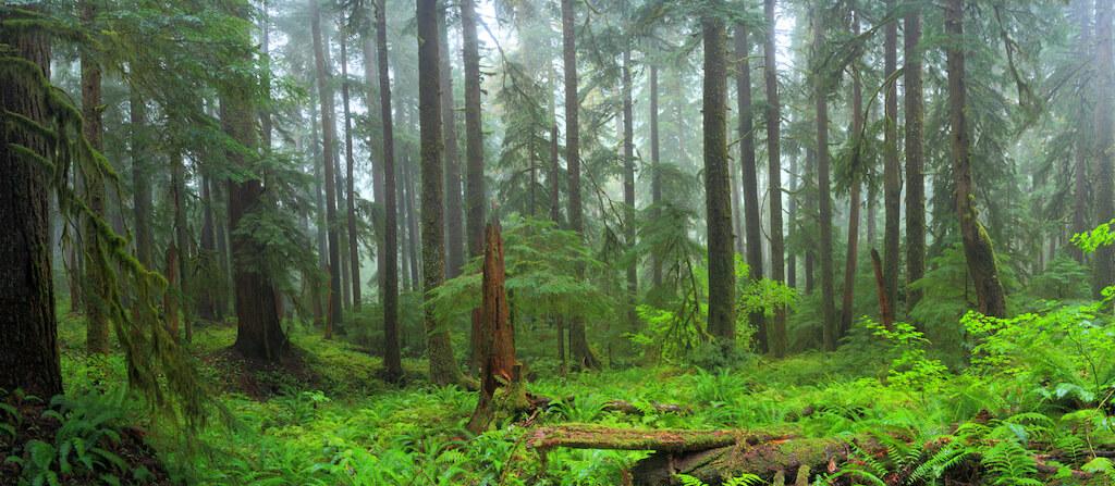 fern rain forest