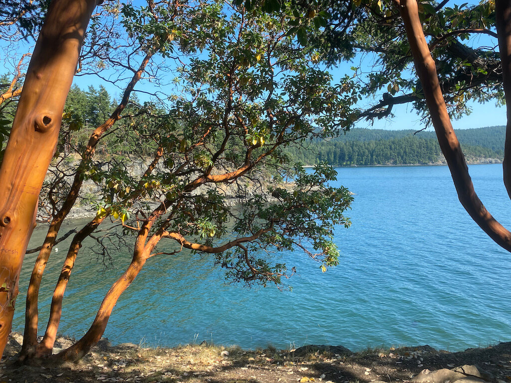 Ocean view through Madrone trees