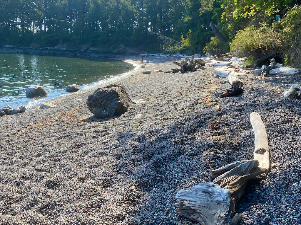 Pebbly beach with drift wood