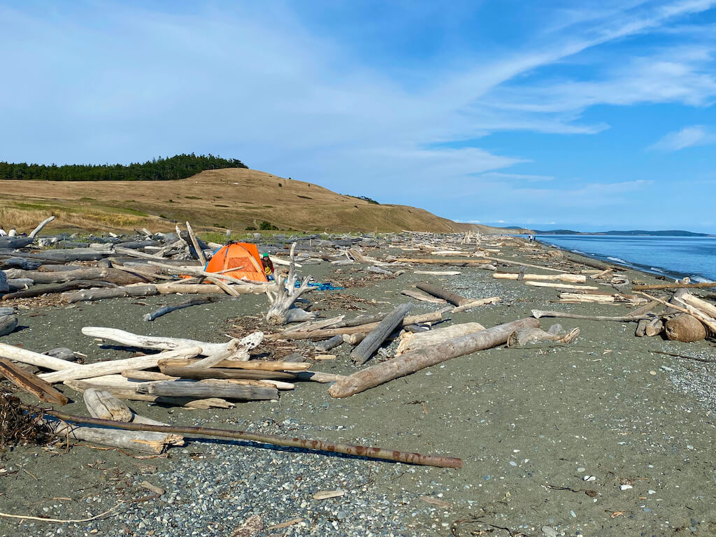 orange tent and driftwood on a beach
