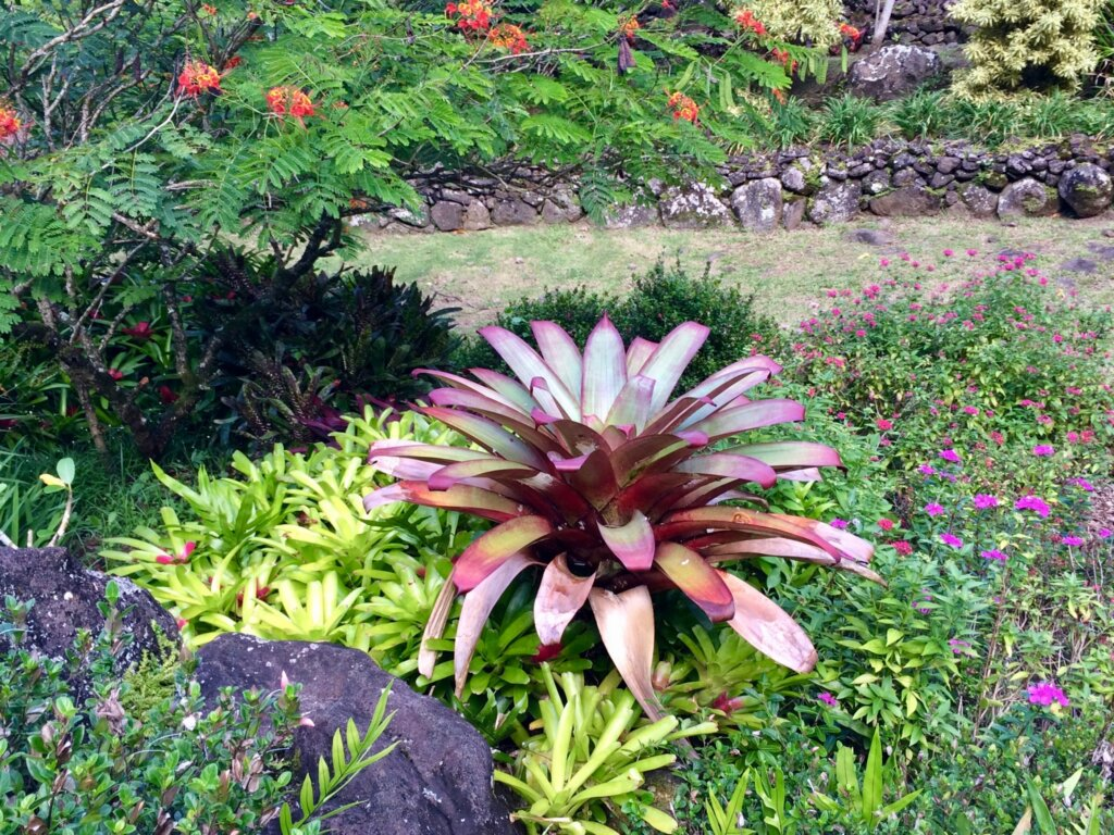bright flowers and bromeliads at Lihuli Gardens