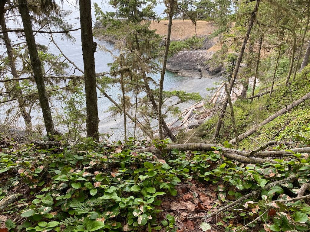 beach view through trees