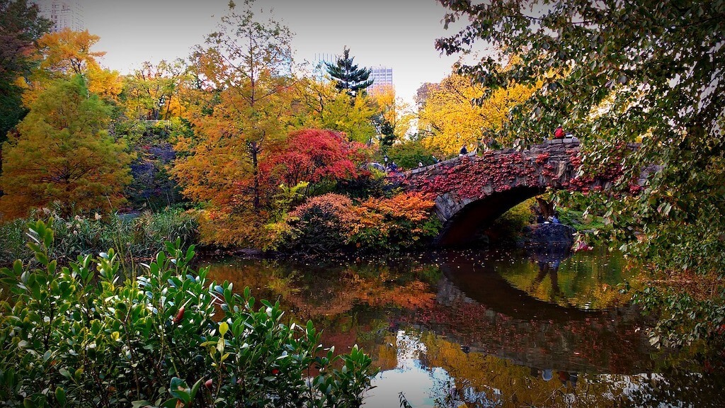 colorful foliage and bridge reflected in pond in Central Park